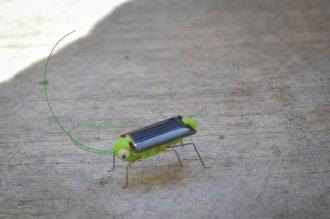 """[Taller JARDINCITO] """"Cocina Solar"""" Impartido por @LorenaHarp Mtra. Lorena trajo un chapulín solar! Se mueve con la luz de sol."""
